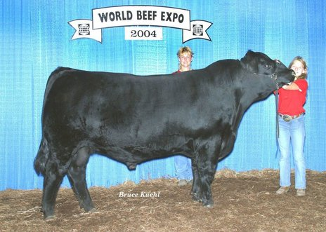 Image result for champion angus bull show